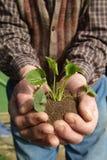 Planta y pista en las manos Imagenes de archivo