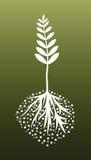 Planta y raíces Fotografía de archivo