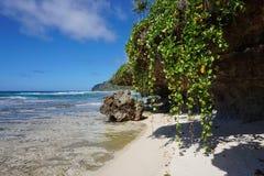 Planta y roca Polinesia francesa del arrastramiento de la orilla de mar Imagenes de archivo
