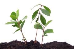 Planta y suelo Foto de archivo