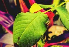 Planta y un insecto Imágenes de archivo libres de regalías