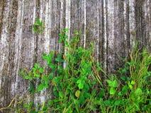 Planta y vidrio del arrastramiento en la pared Fotografía de archivo libre de regalías