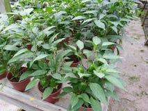 plantaardig Stock Afbeeldingen