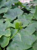 plantaardig Stock Foto