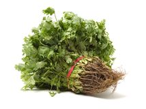 Plantaardig de installatie groen voedsel van de peterselie vers bos stock foto