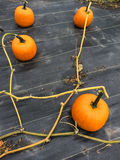Plantaardig flard met rijpe oranje pompoenen Stock Fotografie