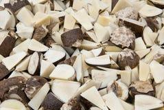 Plantaardig Ivoor - Tagua-Zadenbesnoeiing stock afbeeldingen