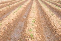 Plantaardig landbouwbedrijf Stock Fotografie
