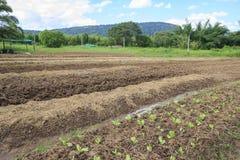 Plantaardig landbouwbedrijf stock foto's