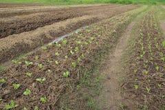 Plantaardig landbouwbedrijf royalty-vrije stock fotografie