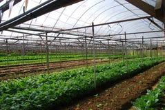Plantaardig landbouwbedrijf Stock Afbeeldingen