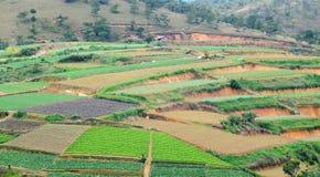Plantaardige gebieden op de heuvel in Daklak, Vietnam Stock Foto's