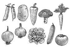 Plantaardige inzamelingsillustratie, tekening, gravure, lijnkunst, groente, vector Stock Afbeeldingen