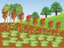 Plantaardige Landbouwbedrijf Vectorillustratie en Achtergrond Stock Afbeeldingen