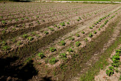 Plantaardige landbouwbedrijven Royalty-vrije Stock Afbeeldingen