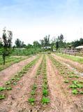 Plantaardige Landbouwbedrijven stock fotografie