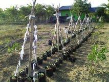plantaardige landbouwers Royalty-vrije Stock Fotografie