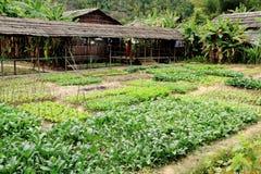 Plantaardige Landbouwgrond Stock Afbeeldingen