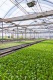 Plantaardige loods Stock Foto's