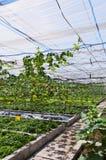Plantaardige loods Stock Fotografie