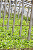 Plantaardige serre Stock Fotografie