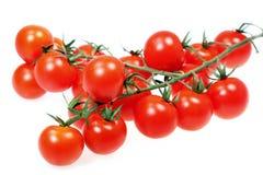 Plantaardige tomaat Stock Foto