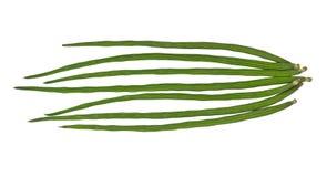 Plantaardige Voedselinstallatie Stock Fotografie
