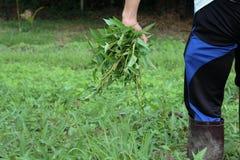 plantaardige winde Stock Foto