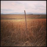 plantación Fotos de archivo