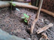 plantación Imagen de archivo