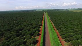 Plantación anaranjada en el día soleado - visión aérea en el Brasil almacen de metraje de vídeo