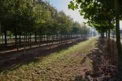 Plantación con los árboles frutales en luz del otoño Foto de archivo