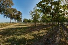 Plantación con los árboles frutales en luz del otoño Imagenes de archivo
