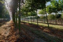 Plantación con los árboles frutales en luz del otoño Imágenes de archivo libres de regalías
