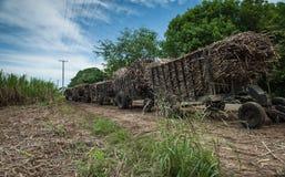 Plantación cosechada de la caña de azúcar Fotografía de archivo