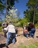 Plantación de árboles Imagen de archivo libre de regalías