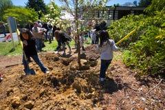 Plantación de árboles Imagen de archivo