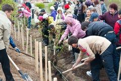 Plantación de árboles de la ciudad Imágenes de archivo libres de regalías