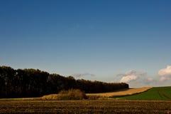 Plantación de árboles del día soleado del otoño del campo de maíz Foto de archivo