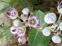 Plantación de árboles natural de la belleza del lirio de las flores foto de archivo libre de regalías