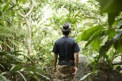 Plantación de café de Bali Imágenes de archivo libres de regalías