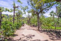 Plantación de café de Guatemala Fotografía de archivo
