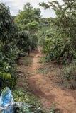 Plantación de café en Vietnam fotografía de archivo libre de regalías