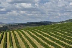 Plantación de café de la granja en el Brasil imágenes de archivo libres de regalías