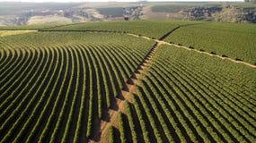 Plantación de café de la visión aérea en el estado de Minas Gerais - el Brasil Imágenes de archivo libres de regalías