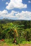Plantación de Croydon, Jamaica Foto de archivo