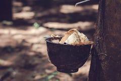 Plantación de goma y x28; Milk& de goma x29; en Tailandia Imagen de archivo libre de regalías