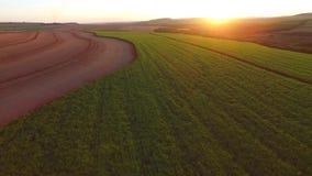 Plantación de la caña de azúcar en la puesta del sol en el Brasil - visión aérea - Canavial almacen de metraje de vídeo