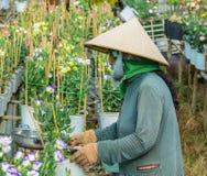 Plantación de la flor en Vietnam meridional imágenes de archivo libres de regalías