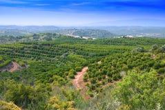 Plantación de la fruta de Algarvian Imagenes de archivo
